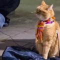 ボブという名の猫 画像